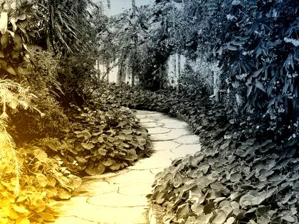 Tecnicatura en Composición de Parques y Jardines