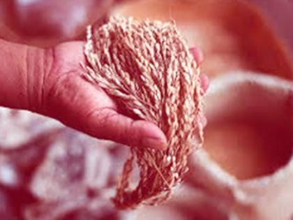 Derecho y Alimentos. La regulación del acceso, la seguridad y la soberanía alimentarias
