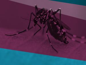 Vigilancia y control de mosquitos vectores de enfermedades virales