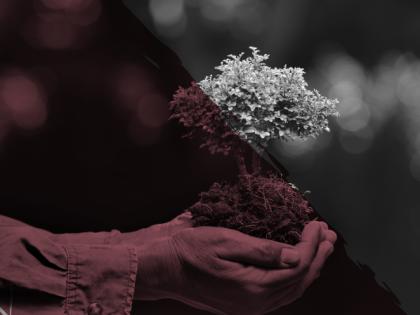 Curso de Actualización: Derechos de la Naturaleza Profundizado