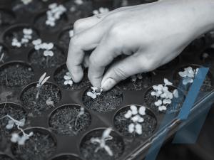 Huertas Urbanas Agroecológicas & Derecho a la Alimentación. Nociones básicas  para producir nuestros alimentos.