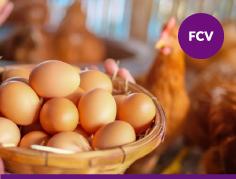 Herramientas Prácticas para la Producción de Huevos